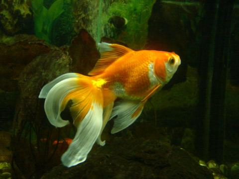 Как распознать больную рыбку