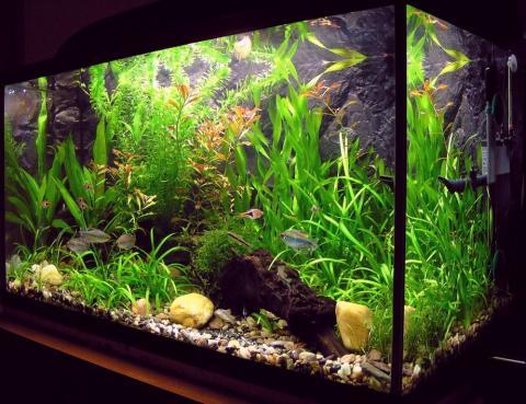Аэрация воды в аквариуме