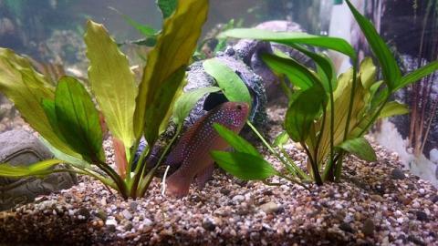 Что нужно знать, покупая аквариум через интернет?