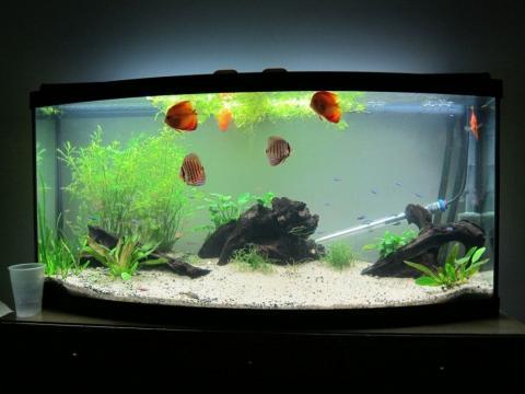 Как оставить аквариумных рыб на время отъезда
