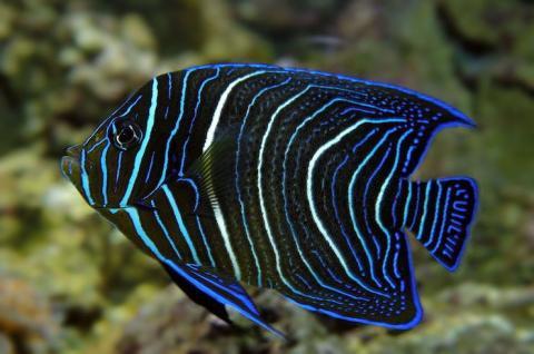 11 самых красивых аквариумных рыбок