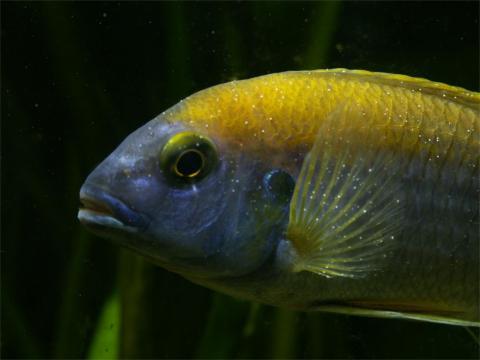 Как предотвратить заболевания аквариумных рыб?