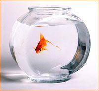 Опасен ли для рыбок круглый аквариум?