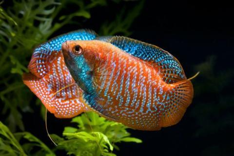 Какие рыбки могут жить без кислорода