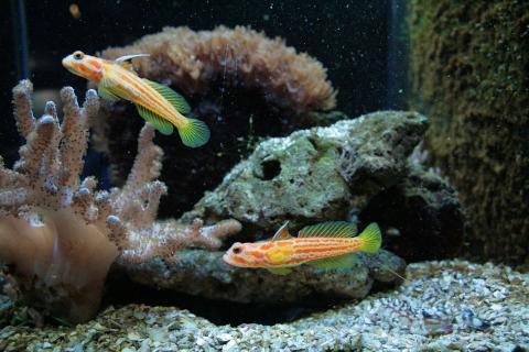 Какие выбрать рыбки для аквариума?