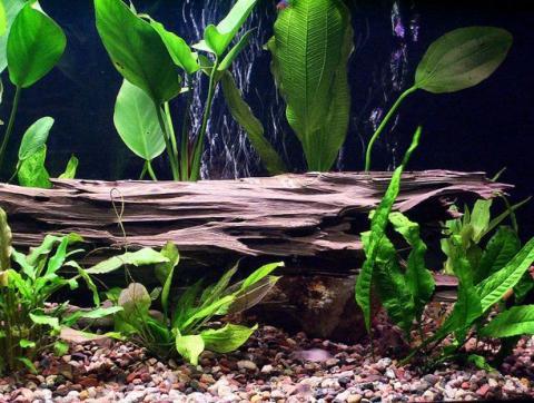Приготовление коряги для аквариума