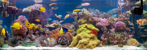 Позитивное влияние на здоровье комнатных аквариумов