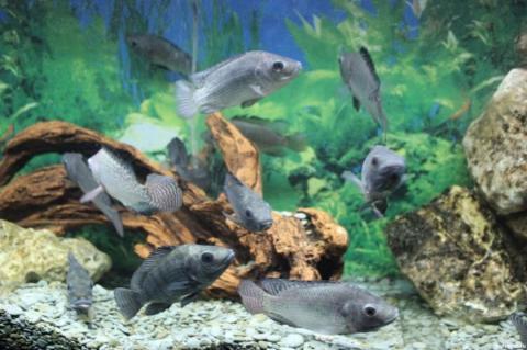 Как выбрать рыбу для аквариума?