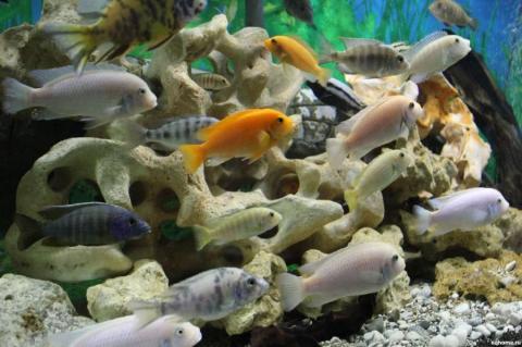 Совместимость аквариумных рыбок