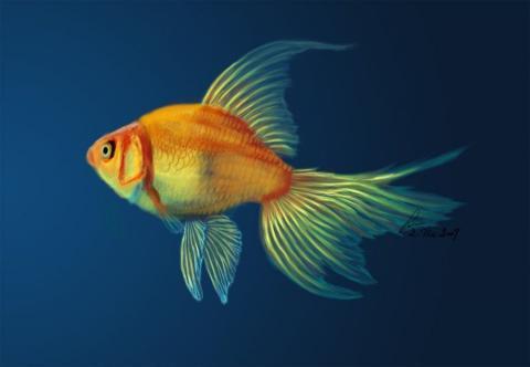 Золотые рыбки. Как не загубить их в самом начале.