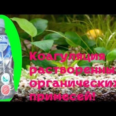 Одна из причин плохого роста аквариумных растений!Выводим органику Гиацинтом![#Аквариумные растения]
