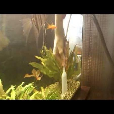 Как чистить дно в аквариуме/чистка аквариума HD