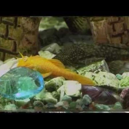 Домашняя ферма   Аквариумные рыбки Часть 2 HD
