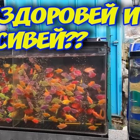 Где купить аквариумных рыбок?