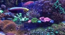 Аквариум-океанариум в доме – это реально!