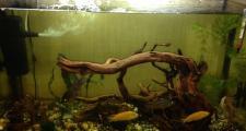 Декоративные элементы из дерева для аквариум