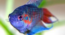 Нужен ли аквариум в детской комнате