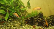 Оформление аквариума, выбор растений