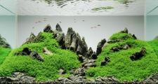 Озонирование воды в аквариуме