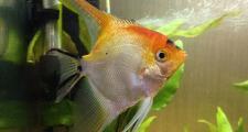 Что нужно знать начинающему аквариумисту