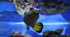 Стресс у аквариумных рыбок
