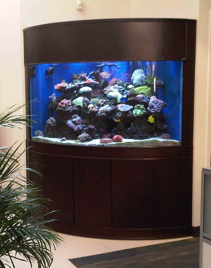 аквариум угловой фото